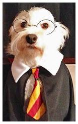2014.07.28—humor-smart-dog