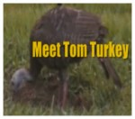 2014.11.24—video-tom.the.turkey