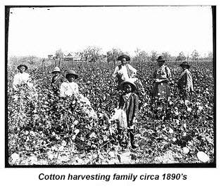 2015.08.31-history-cotton.harvesters
